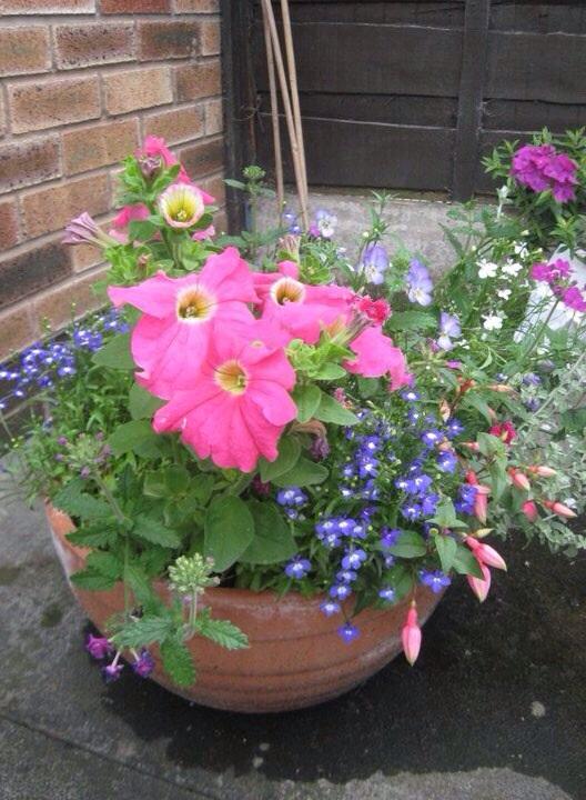 Summer pots 2010