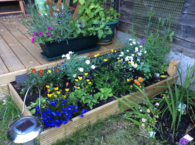 Flower bed with summer flowers
