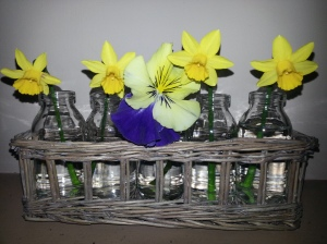 Tete a tete daffodils, a pansy and mini milkbottles - 23 March 2015