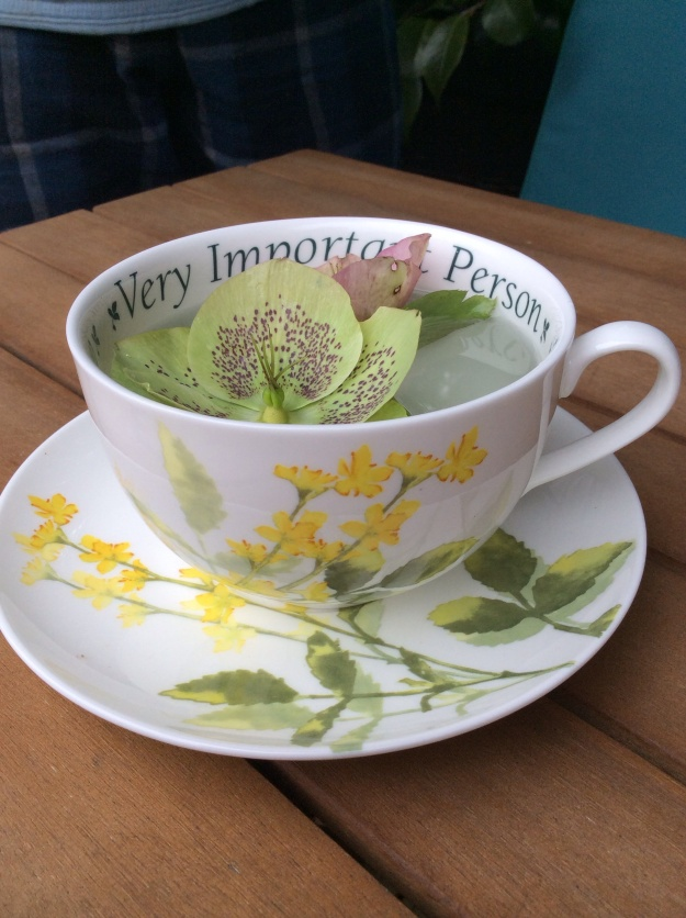 hellebore and an agrimony teacup - 6th April 2016