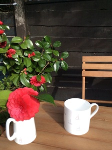 Camellia - with a jug and a mug - 13 April 2015