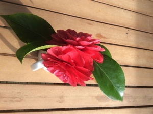 Camellia from the top - 15 April 2015