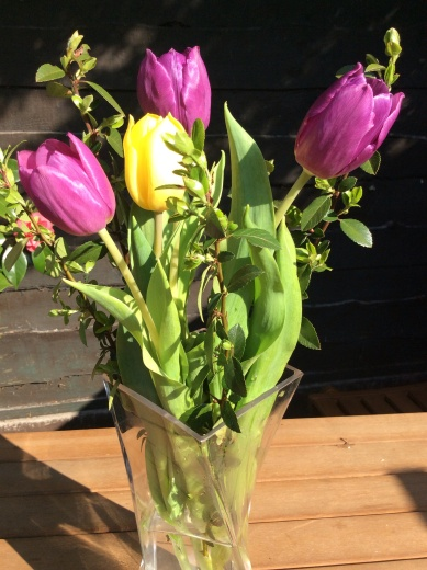 A close up of the purple and yellow tulips with Berbers 21st April 2015