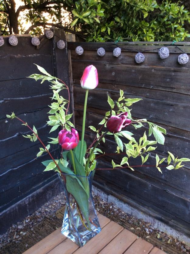 Gardening tulips dogwood