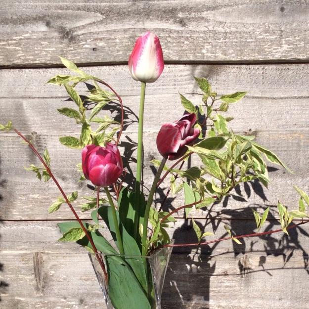 gardenin tulip dogwood vase