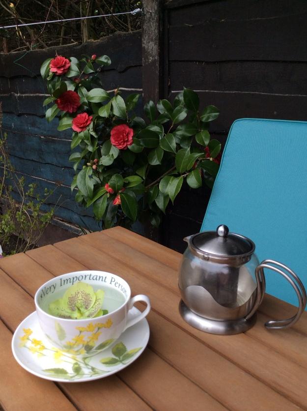 Cup of 'tea' in the garden - 6 April 2015