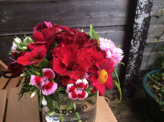 lots of dianthus - I don't know the names as usual - 23 June 2015