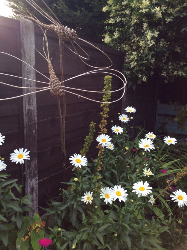Marguerites, campion and dragonflies