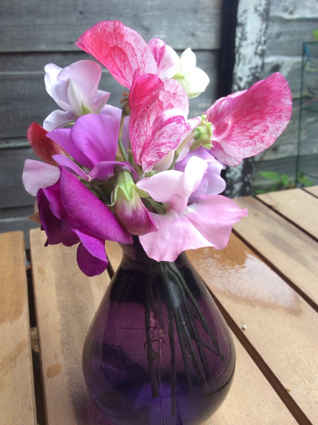 Sweet pea and purple vase