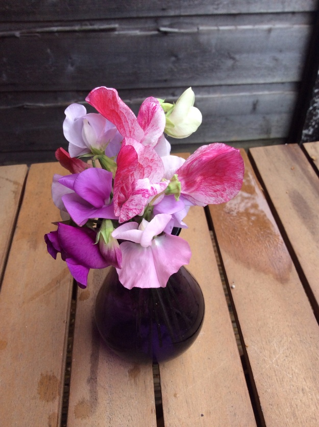 sweetpeas and vase from the eden project