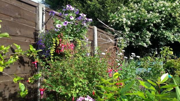 summer boarder - hanging baskets, dragonflies and allium 20 July 2015