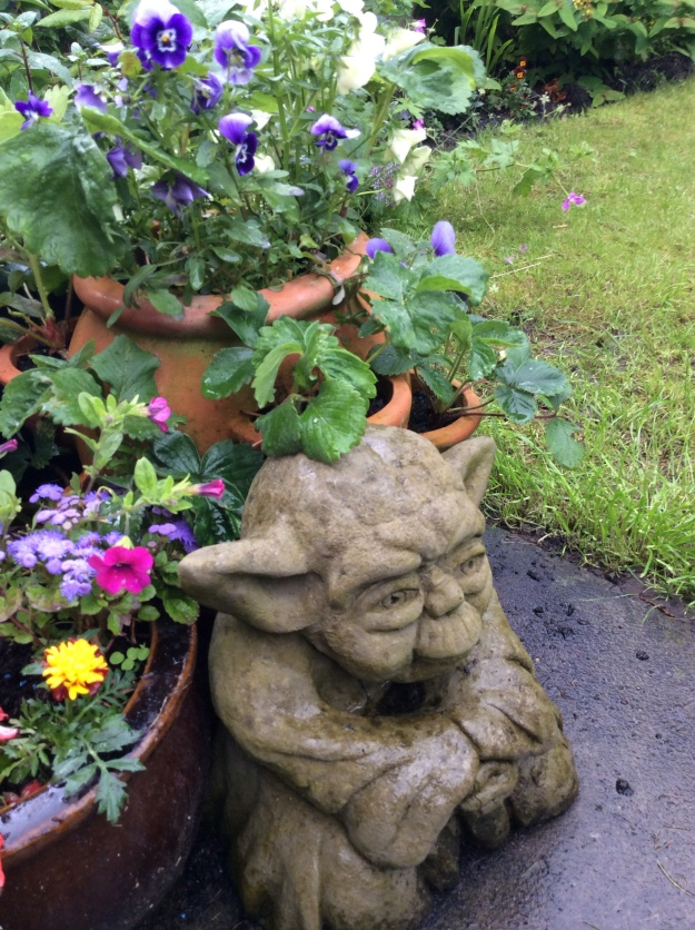 yoda with flowers