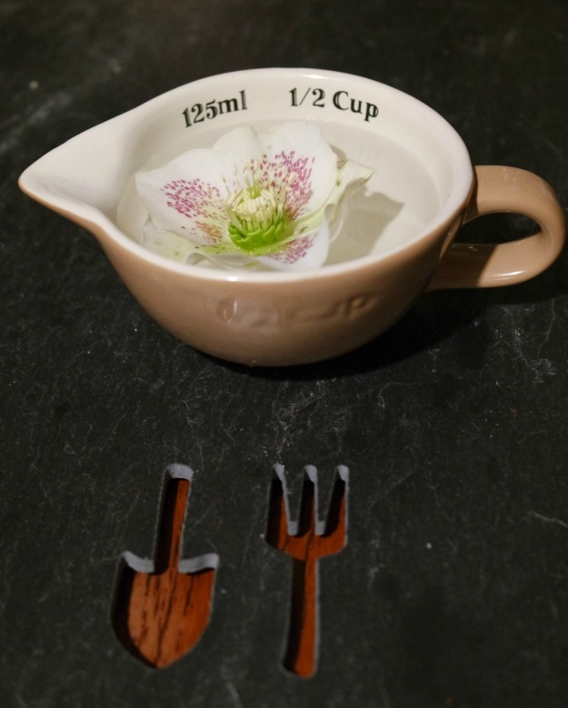 In a Vase on Monday - Hellebore and half cup cooking measure