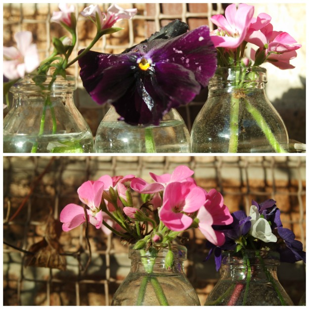 viola, pelagonium and primula
