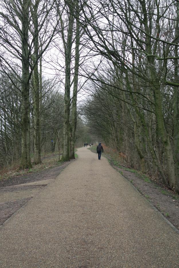 tress old railway line Loopline at Monton - National Cycle path 55