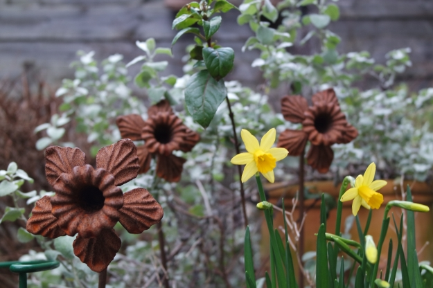 iron daffodils and tete a tete