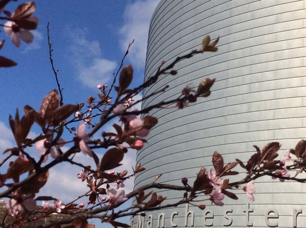 Pink blossom At the university of Manchester