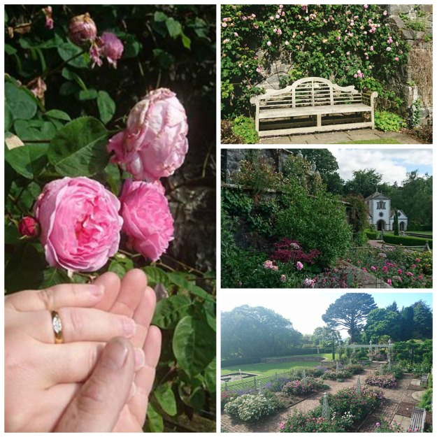 engagement rings, roses, bench, Bodnant Garden Conwy