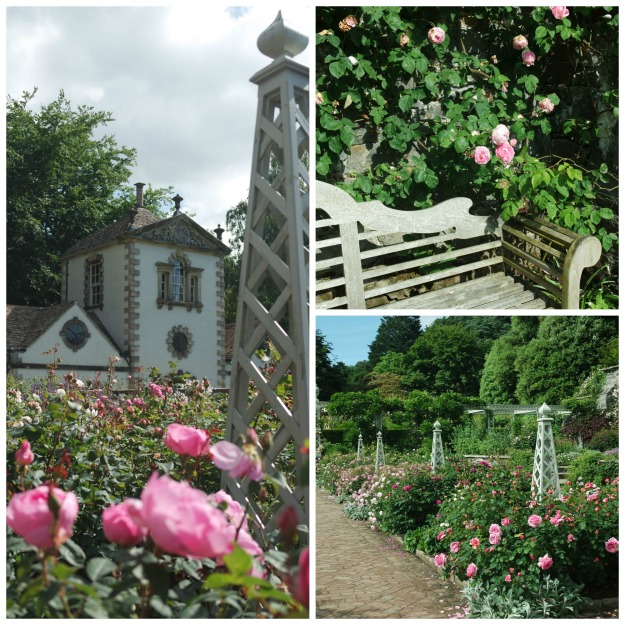 Rose garden at Bodnant, engagement bench, Constance Spry roses