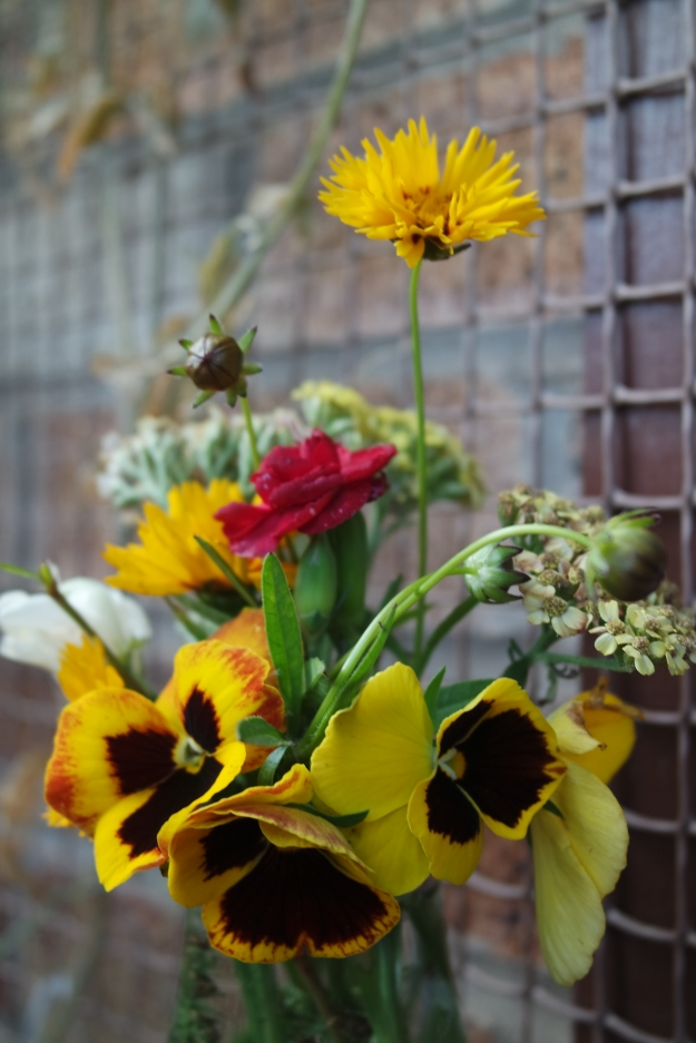 Coreopsis – sunfire, red dianthus, Achillea, sweetpea milk bottle vase
