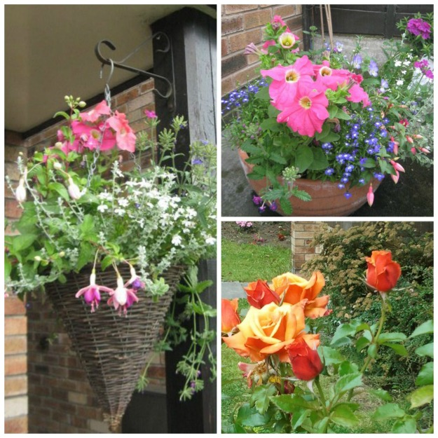 hanging basket and pot with pink petunias, fuchsia and lobelia - orange rose