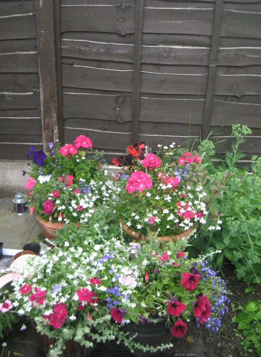 Pink, purple fuchsia, petunia, lobelia' helicrysum, pelagoniums in Pots. Copyright R Jones