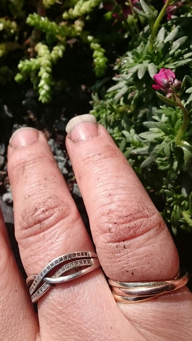 Hand with two rings with mud under fingernails, sedums in background